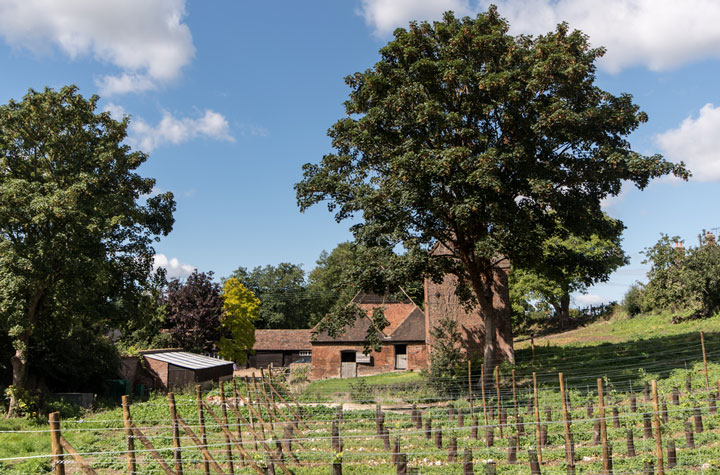 Chartham Vineyard tours